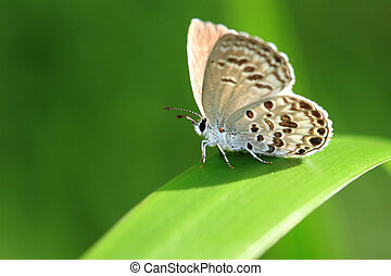 cute butterfly with green background
