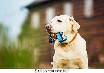 cute, cão, esperando, para, passeio