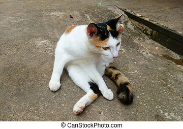 Cute Calico Cat Sitting and Grooming itself on the Floor