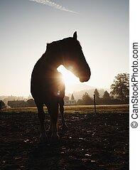 Cute calm horse in morning sunlight