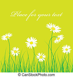 Cute camomile floral background