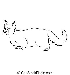 Cute cartoon munchkin cat lineart vector clipart. Pedigree kitty breed for cat lovers. Purebred grey domestic kitten for monochrome pet parlor illustration mascot. Isolated feline housecat.