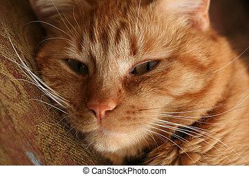 a close up of a cute cat