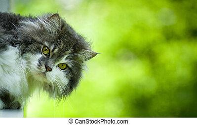 Cat's head - looking at camera.