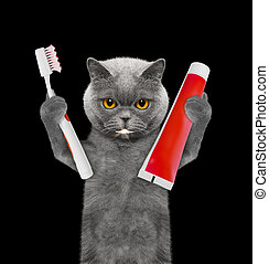 Cute cat clean the teeth with a toothbrush. Isolated on black