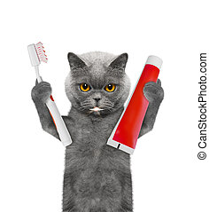 Cute cat clean the teeth with a toothbrush. Isolated on white
