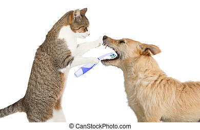 Cute cat cleaning a dogs teeth - Cute little cat helping out...