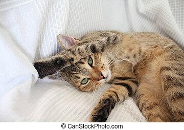 Cute tabby cat relaxing
