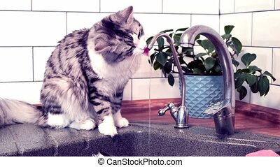 Cute cat drinking water from the tap. Slaw motion
