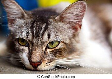 Cute cat face in close up
