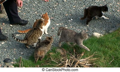 Group of cute cats receive food from the owner.