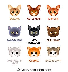 Cute cat icons, set VI