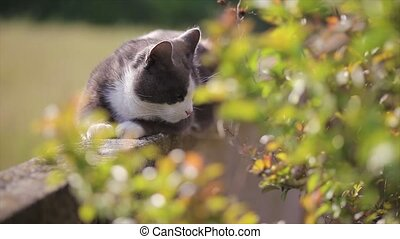 Cute cat immersed in nature liying