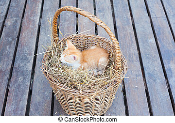 Cute cat in a basket