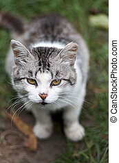 Cute cat in garden.Portrait of a cat on the nature