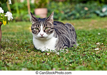 cute cat in the garden