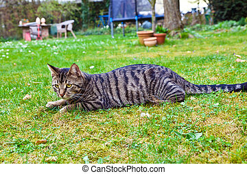 cute cat in the garden in green grass