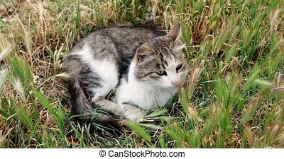 Overhead view of Cute cat rest in the tall grass