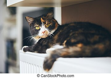 Cute cat is relaxig at home