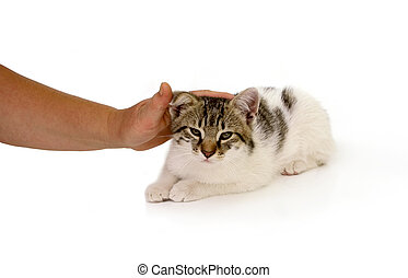 Cute cat - Little cute cat