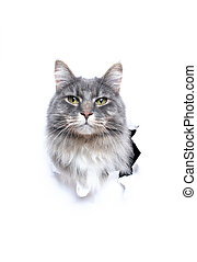 cute cat looking out of hole in torn white paper with copy space