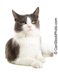 cute cat on a white background