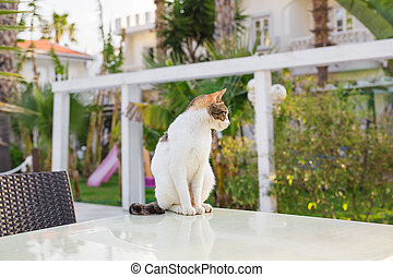 Cute cat outdoors