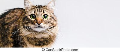cute cat panoramic