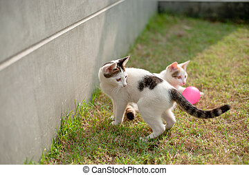Cute cat playing pink ball in the green grass