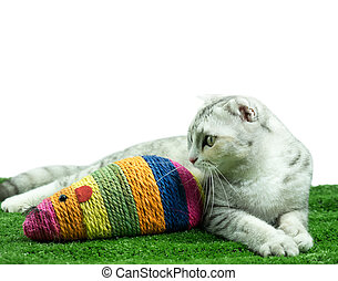 Cute cat playing with Mouse colorful toy for cats pets/Cat toys For nails.