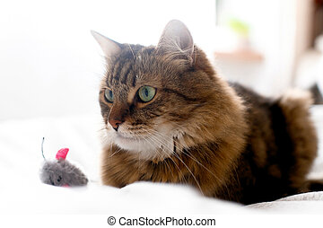 Cute cat playing with mouse toy on white bed in sunny stylish room. Maine coon with green eyes playing with with funny emotions on comfortable bed. Space for text