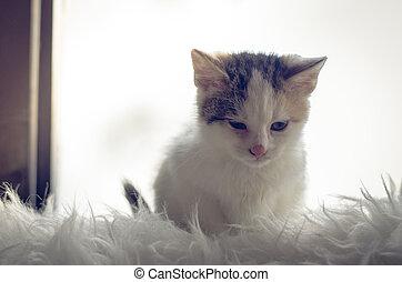 cute cat sitting by window