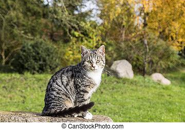 cute cat sitting on a rock