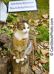 Cute cat sitting on a tree stump