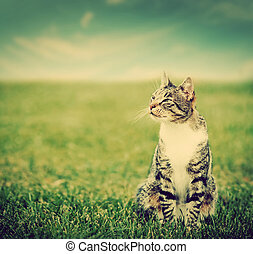 Cute cat sitting on green spring grass on sunny day. Vintage...