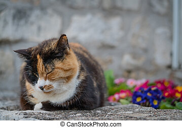 Cute cat sitting on the ground