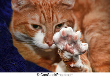 cute cat stretching : Paw with Claws