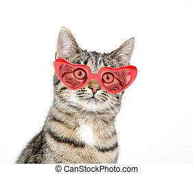Cute cat with heart sunglasseson white background - Cute pet...