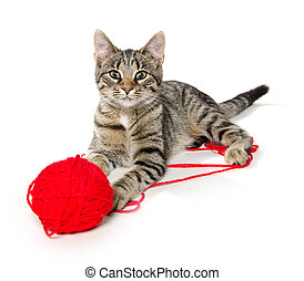 cute cat with red ball of yarn - Cute pet tabby cat with red...