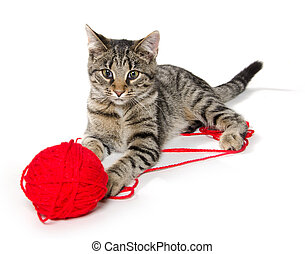 cute cat with red ball of yarn
