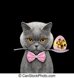 Cute cat with spoon and easter egg. Isolated on black