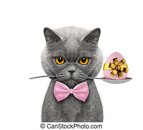 Cute cat with spoon and easter egg. Isolated on white