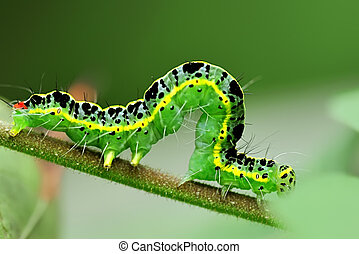 caterpillar on leaf - cute caterpillar on leaf
