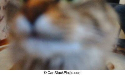 Cute Cat's Muzzle Sniffing the Camera Lens. Slow Motion...