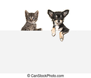 Cute chihuahua dog and tabby baby cat hanging side by side over an grey paper border with room for text on a white background