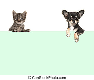 Cute chihuahua dog and tabby baby cat hanging in the corners over an green paper border with room for text on a white background