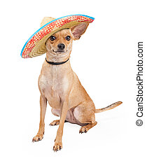 Cute Chihuahua Dog Wearing Mexican Sombrero
