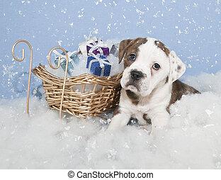 Cute Chrismas Bulldog
