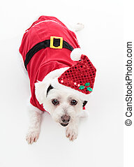 Cute Christmas dog - An adorable Christmas pooch wearing a...