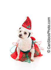 Cute Christmas pet dog